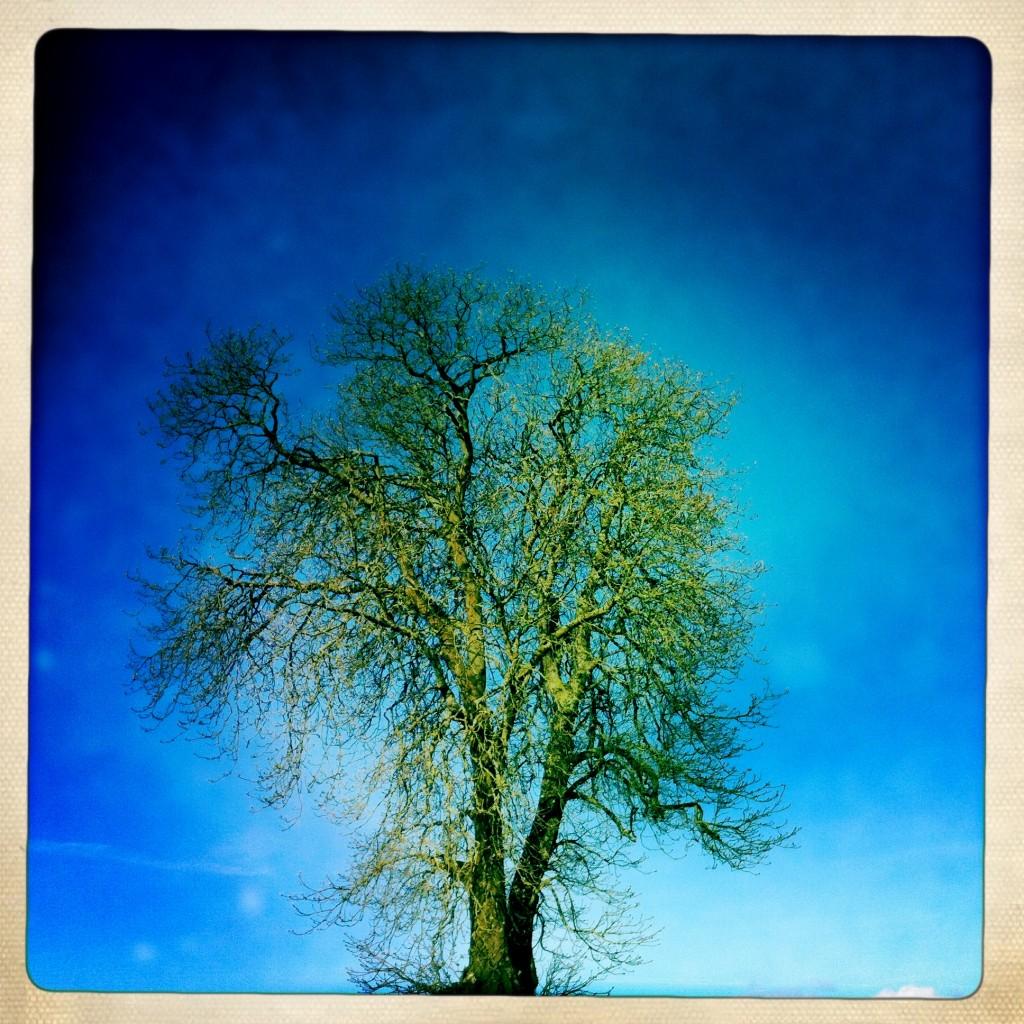 011 tree