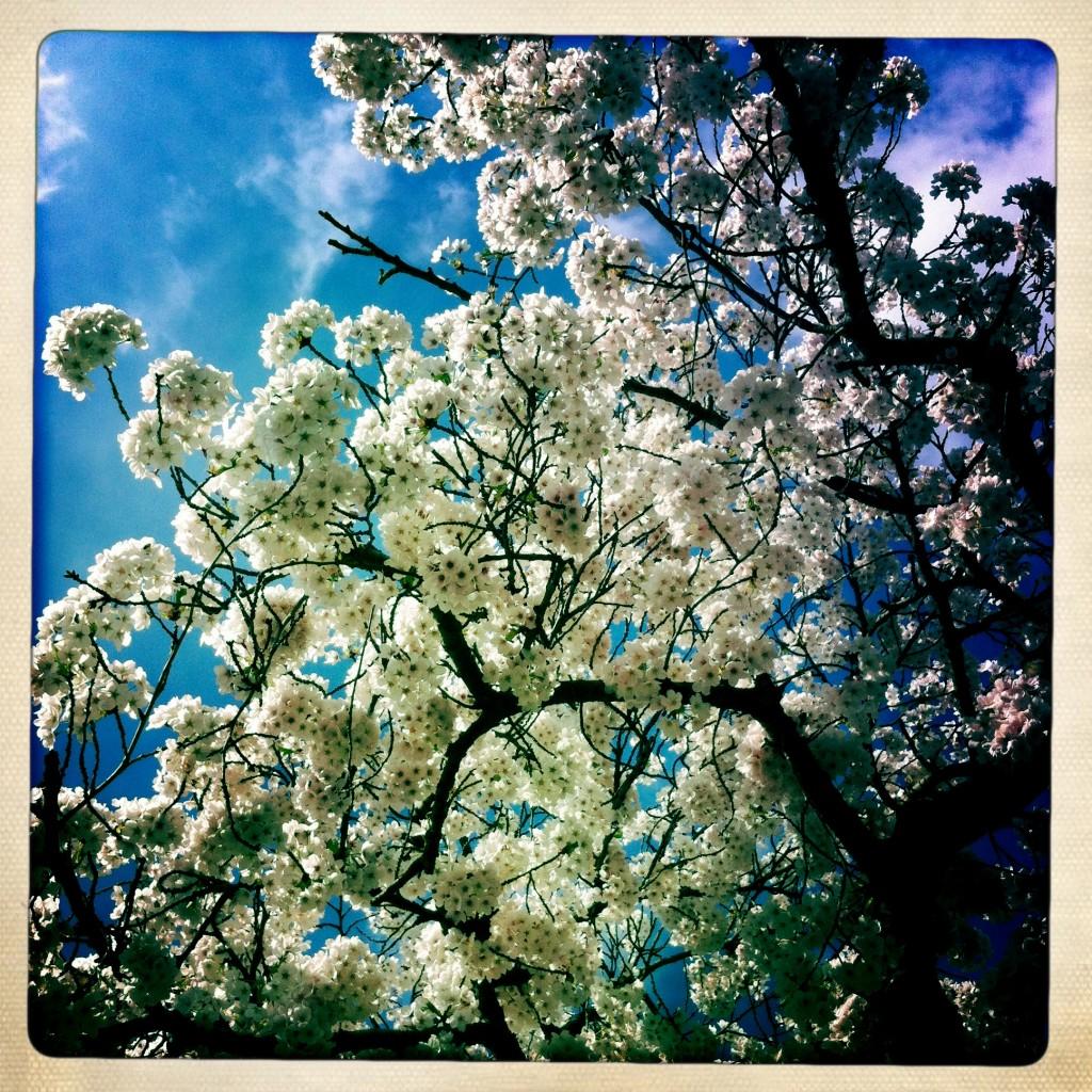 012 blossom